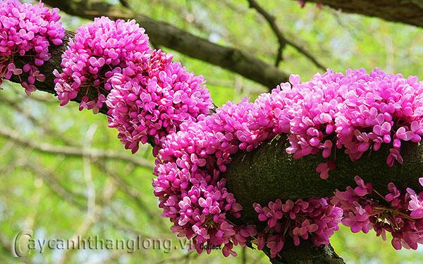 10 loại cây bóng mát tuyệt đẹp và quý hiếm tại Việt Nam