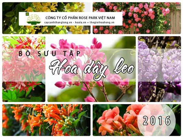 101 loài Hoa, Cây dây leo trồng làm mát nhà mùa hè
