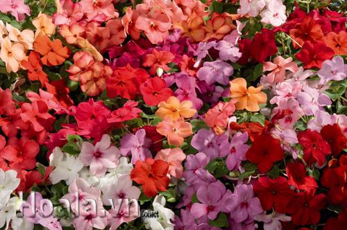 Hình ảnh icon21404529862.jpg