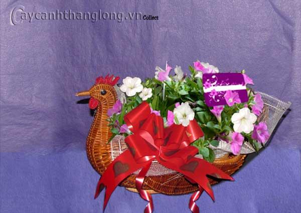 Điện hoa - Dạ yến thảo