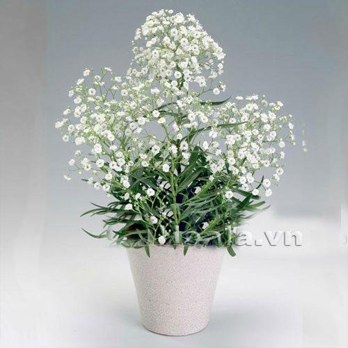 Bồn hoa 40