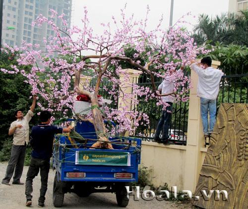 Cây hoa anh đào hoa giả