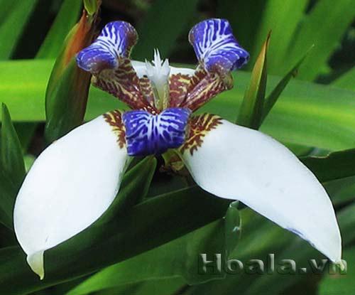 Mẫu hoa ban công hoàng hôn