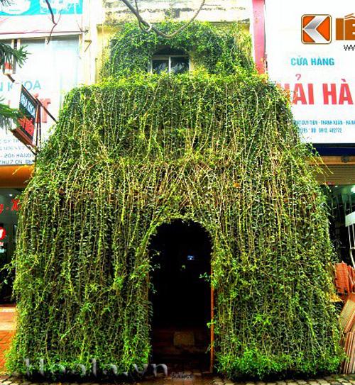 Cây Cúc tần Ấn Độ