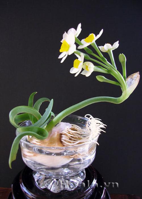 Hoa Thủy tiên