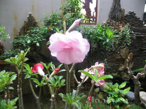 Mẫu Vườn đứng 46