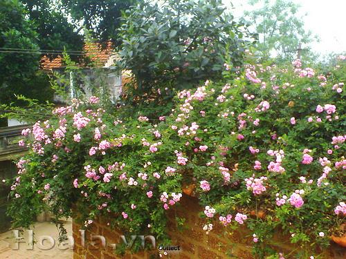 Mẫu Vườn đứng 72