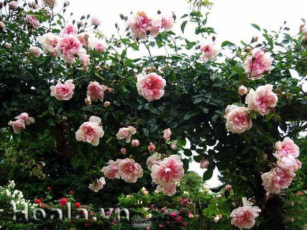 Mẫu phun nước Đài Loan_11