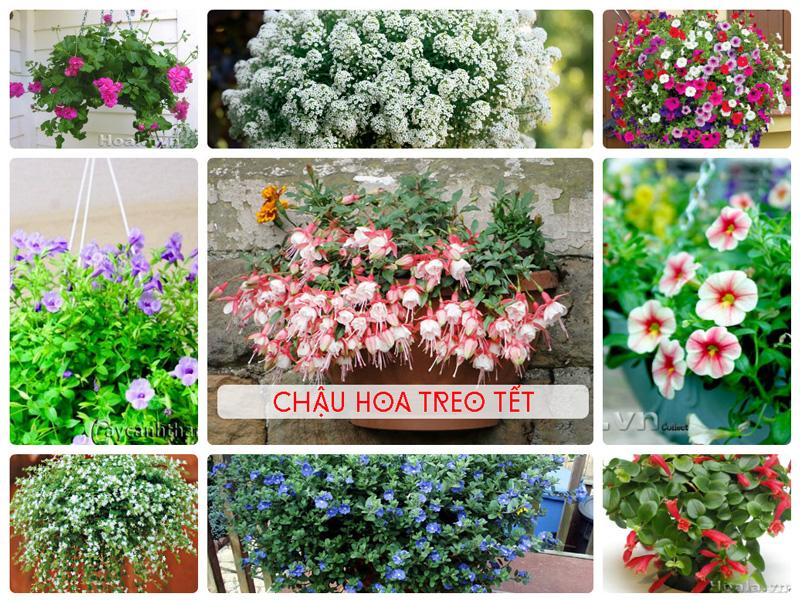 Những sản phẩm hoa Xuân hoa Tết độc đáo tại Cây cảnh Thăng Long