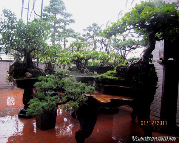 Vườn trên mái 16