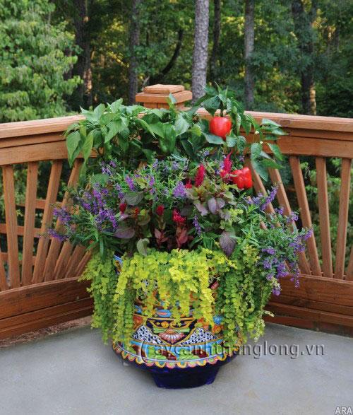 Chậu hoa biến tấu – nghệ thuật chơi hoa, cây cảnh ấn tượng | hoala.vn