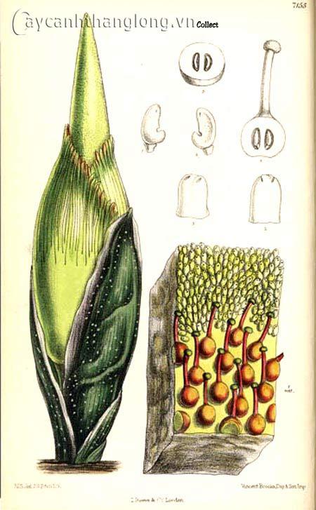 Loài hoa kỳ lạ nhất quả đất | hoala.vn