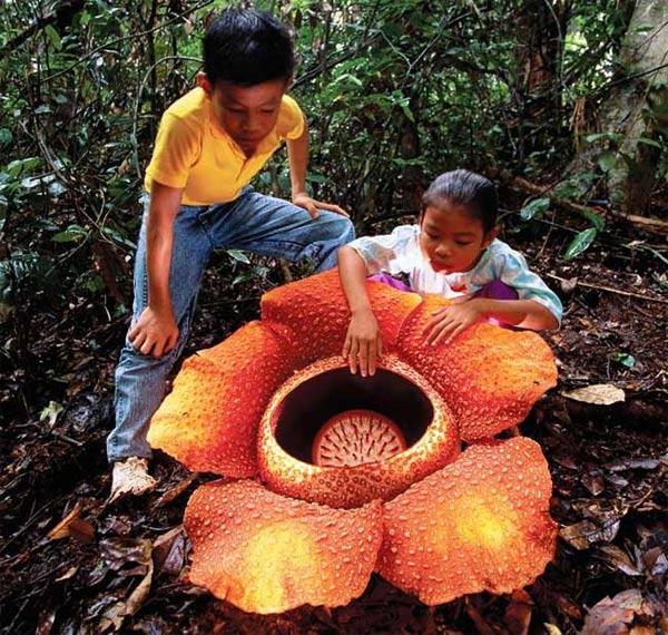 hoa lạ - Những loài hoa kì lạ nhất trên thế giới | hoala.vn