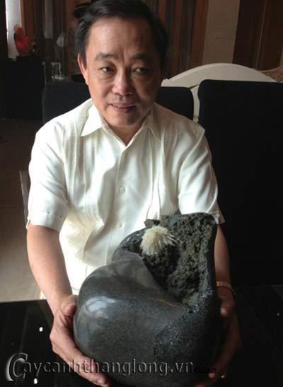 hoa lạ - Hòn đá nở hoa lạ ở TP.HCM | hoala.vn