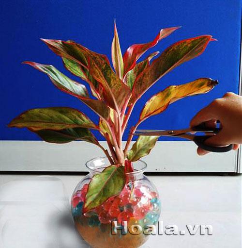 Trồng và chăm sóc cây nội thất bằng GIÁ THỂ THỦY SINH   hoala.vn
