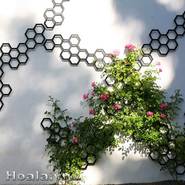 gian-hoa-hong-leo-2