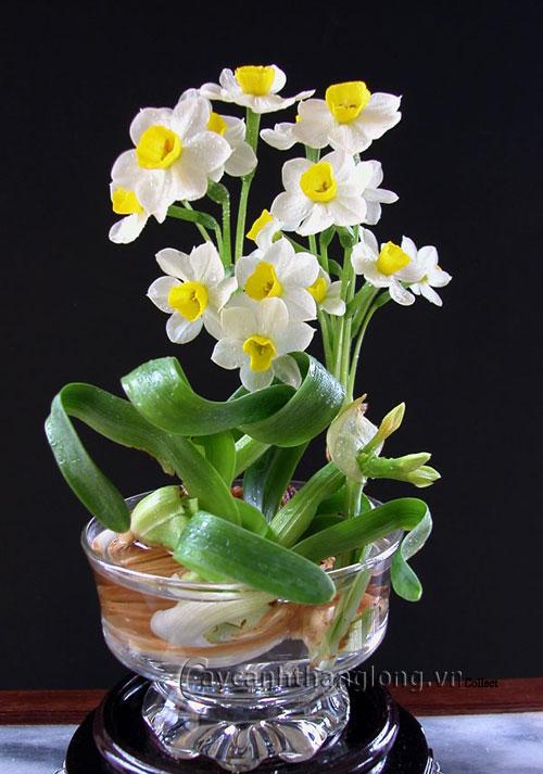 hoa mau trang - hoa thuy tien