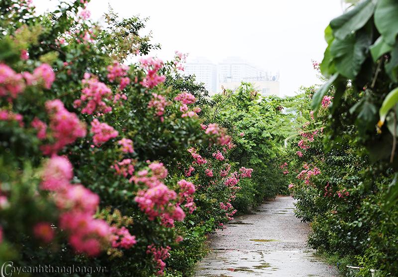 hoa lạ - công viên thực vật cảnh việt nam