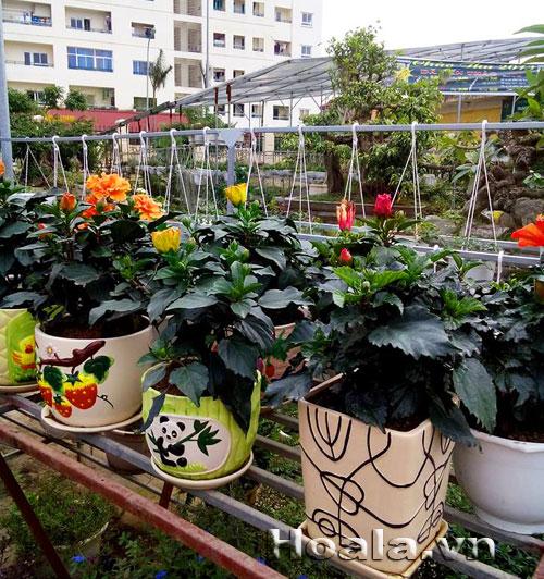 Shop_hoa_3| hoala.vn