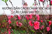 huong-dan-cach-cham-soc-hoa-cay-canh-sau-tet
