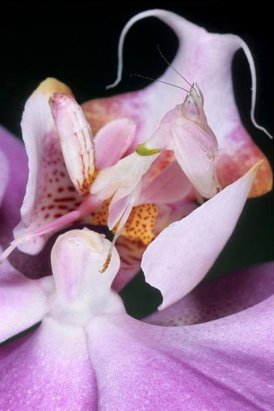 Tận mắt ngắm  hoa lạ khát máu ở Việt Nam