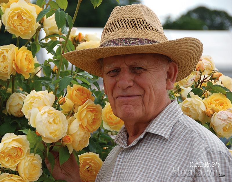 BST những giống hoa hồng ngoại màu vàng rực rỡ