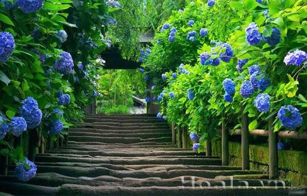 Hoa màu xanh cho ngày hè dịu mát