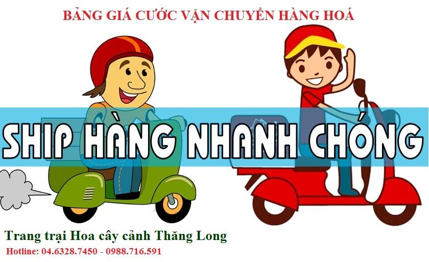 Bảng giá cước vận chuyển hàng hoá - Cây cảnh Thăng Long