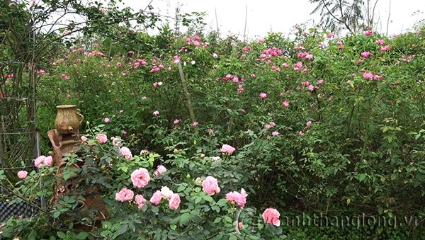 10 lí do lựa chọn Trang trại hoa cây cảnh Thăng Long làm điểm đến trong dịp nghỉ lễ