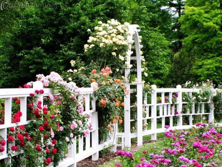 Thiết kế thi công các hạng mục Vườn hồng