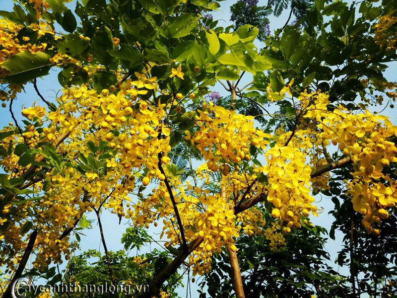 Trang trại hoa cây cảnh Thăng Long, điểm du lịch hấp dẫn với nhiều điều thú vị ngay tại Hà Nội