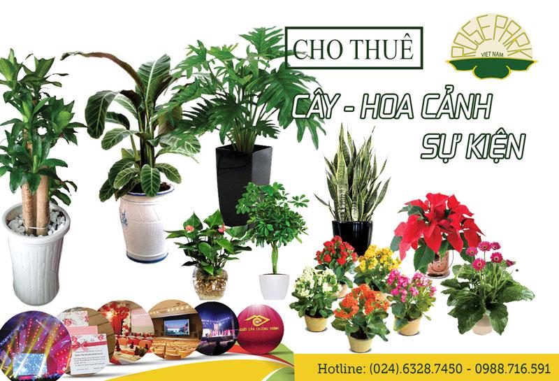 Cho thuê cây hoa cảnh sự kiện, hội nghị tại Hà Nội