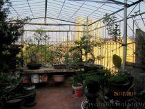Thăm vườn trên mái nhà ông Đào