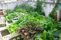 Bí quyết trồng rau sạch trên mái