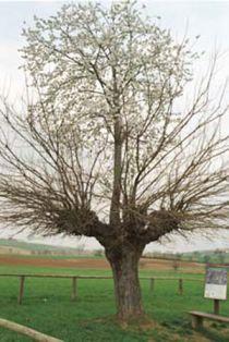 Kỳ lạ cây mọc trên cây