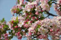 Nàng Quý phi của muôn hoa