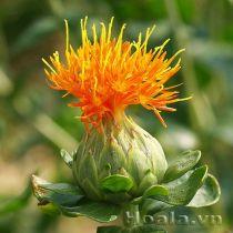 Hồng hoa sắc cam vàng rực rỡ