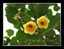 Hoa Trà thay xiêm y lộng lẫy