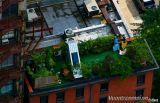 Cách xây dựng vườn trên cao