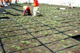 Hệ thống mái xanh Mô-đun GreenGrid® Trelleborg