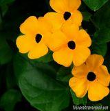 Các loài hoa quý của Caycanhthanglong.vn