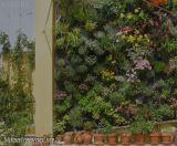 Vườn trên tường theo phong cách của Patrick Blanc
