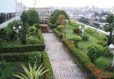 Vườn trên mái Gutta