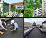 Thi công vườn trên mái nhà