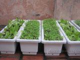 Vật liệu ứng dụng cho làm vườn trên mái