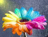 Hoa bảy sắc cầu vồng
