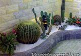 Ấn tượng với vườn xương rồng trên chung cư