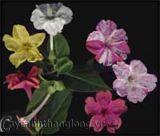 Những bông hoa và khả năng lạ