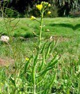 Những loài thực vật quanh năm thích nghi tiến hóa với thời tiết  biến đổi