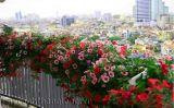 Dịch vụ quản lý giám sát chất lượng Bonsai-vườn cảnh